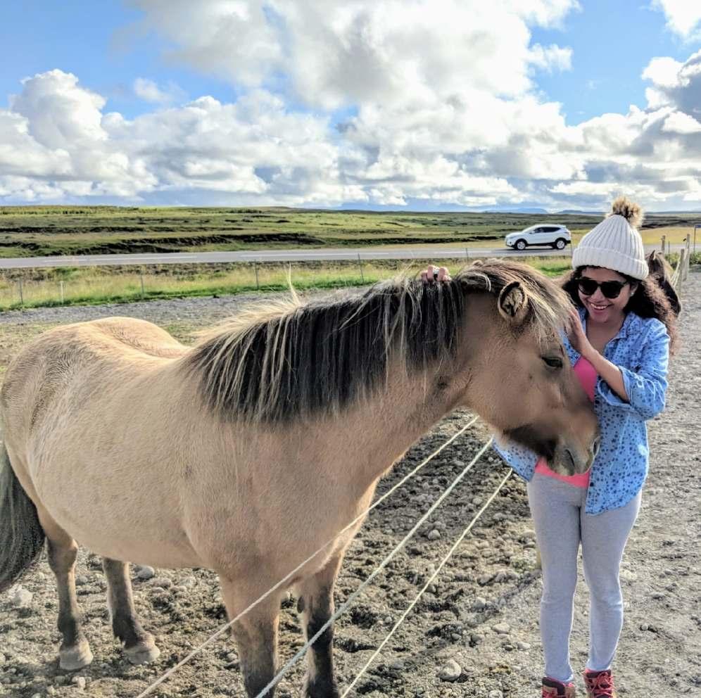 Petting a Icelandic horse