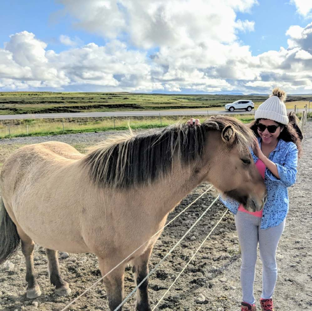 Petting a Icelandic horse